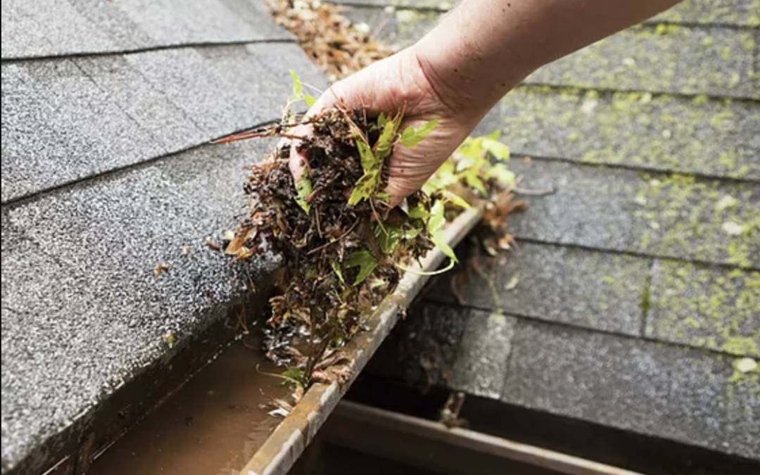 Save on Cleaning & Maintenance Expenses with Gutter Mesh