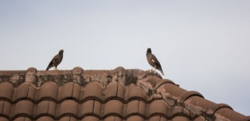 Residential Bird Protection